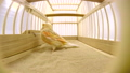 singing canary in a cage isolated on a white scree 29403625