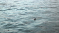 Slow motion :  River surface with Fish 29475603