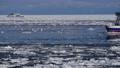 砕氷船と流氷 29507532