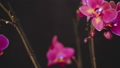 花朵 花 花卉 29512318