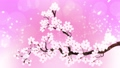 桜 さくら サクラの動画 29601249