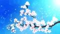 桜 さくら サクラの動画 29601250