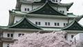 cherry blossom, cherry tree, sakura 29888087