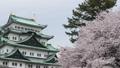 cherry blossom, cherry tree, sakura 29888159