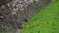 桜舞い散る名古屋城のお堀 フィクス撮影 29888189