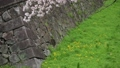 桜舞い散る名古屋城のお堀 フィクス撮影 29888190