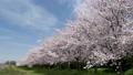 桜と青空 29902615