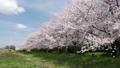 桜と青空 29902616