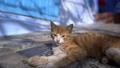 小貓 29971017