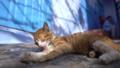 小貓清潔 29971570