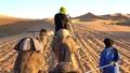 騎行駱駝 29971571