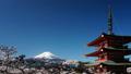 富士山タイムラプス 春満開の桜と浅間神社 ピーカン 青空 2017年4月 ティルトダウン 30079768