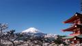 富士山 富士 新倉山浅間公園の動画 30079771