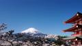 富士山 富士 新倉山浅間公園の動画 30079772
