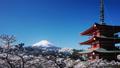 富士山タイムラプス 春満開の桜と浅間神社 ピーカン 青空 2017年4月 斜めパン 30079773