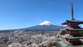 富士山 春満開の桜 浅間神社 快晴青空 空撮風撮影 30079959