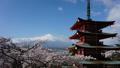 富士山タイムラプス 新倉富士浅間神社 満開の桜と頂に激しく流れる雲 2017年4月 FIX 30083278