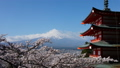 富士山タイムラプス 新倉富士浅間神社 満開の桜と頂に激しく流れる雲 2017年4月 ナロー 30083279