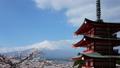 富士山タイムラプス 新倉富士浅間神社 満開の桜と頂に激しく流れる雲 2017年4月 ティルトアップ 30083281