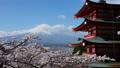 富士山 富士 新倉山浅間公園の動画 30083282