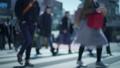 交差点 スーパースロー 人混み 雑踏 動画素材 新宿 渋谷 スクランブル交差点 横断歩道 歩行者 30099850