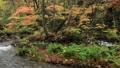 10月 紅葉の奥入瀬渓流 晩秋の東北 30114753