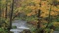 10月 紅葉の奥入瀬渓流 晩秋の東北 30114754