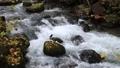 10月 紅葉の奥入瀬渓流 晩秋の東北 30114755