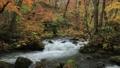 10月 紅葉の奥入瀬渓流 晩秋の東北 30114756