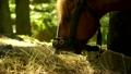 animal, eat, equine 30117636