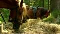 animal, eat, equine 30117689