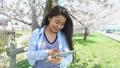 桜の木の下でタブレットを使う女性 30125563