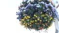 黄色のパンジーの花束 30183481