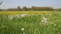 Field of dandelions in The Netherlands 30317162