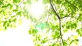 tender green, verdure, foliage 30369307