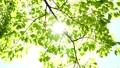 新緑の葉 30369308
