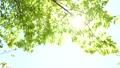 新緑の葉 30369309