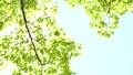 新緑の葉 30369311