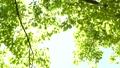新緑の葉 30369313