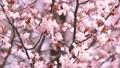 桜 (ティルトアップ) 30382519