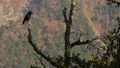 Black birds in the tree on mountains 30407173