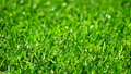 Close-up shot fresh spring green grass with water 30488293