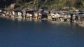 12月 朝焼けの伊根の舟屋 30521428