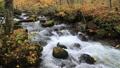 10月 紅葉の奥入瀬渓流 晩秋の東北 30521434