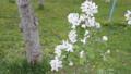 Apple flower 30566491