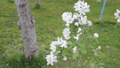 apple, apple blossom, spring 30566491