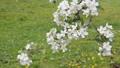 Apple flower 30577678