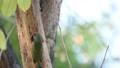 นก,สัตว์,สัตว์ต่างๆ 30652061