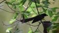 鸟儿 鸟 动物 30652544