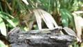 นก,สัตว์,สัตว์ต่างๆ 30656502